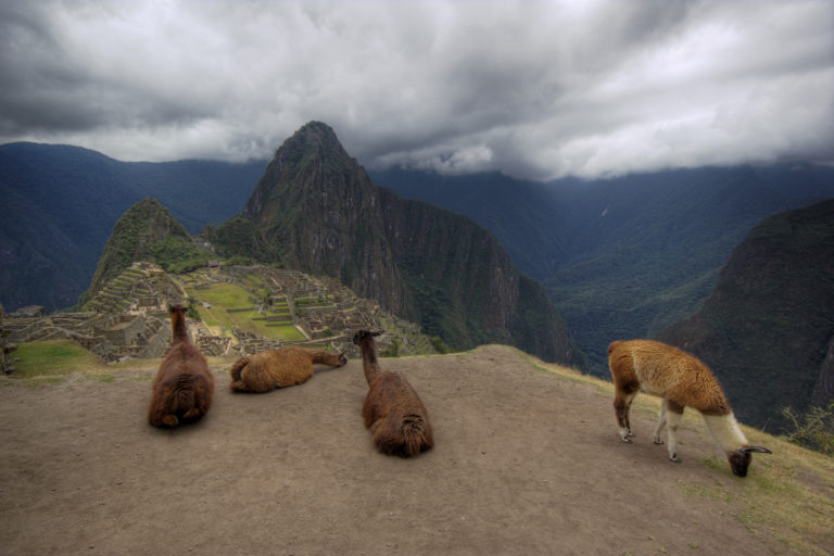 Llamas Overlooking Machu Picchu