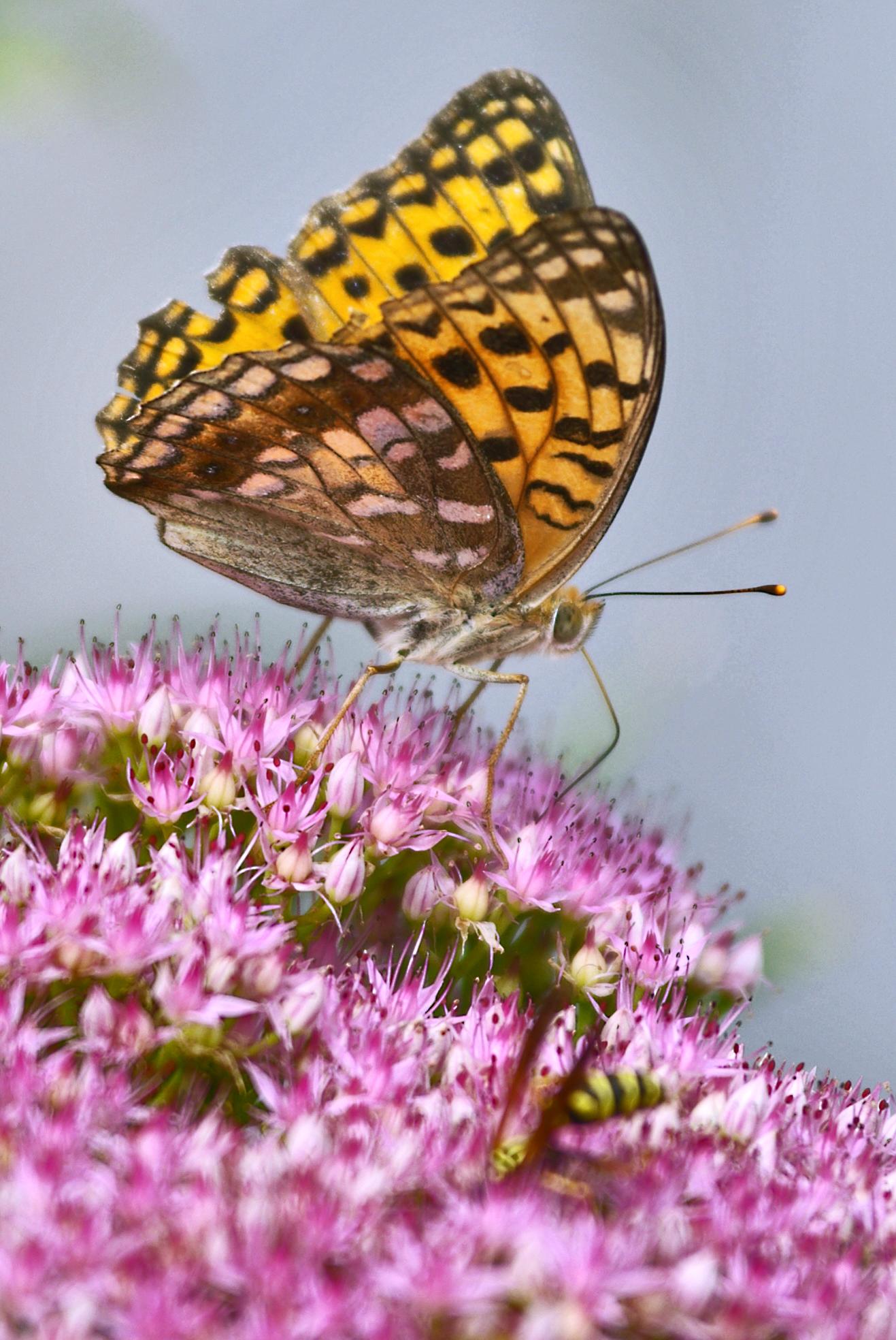 Butterfly in Beijing