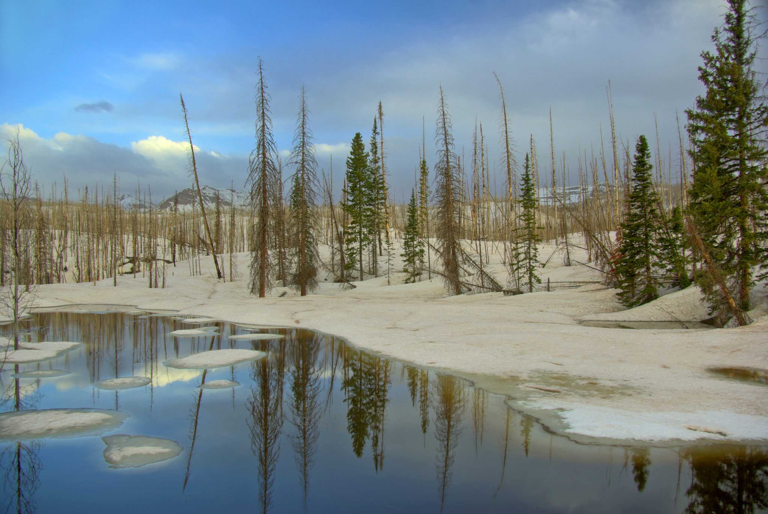 Thawing Pond