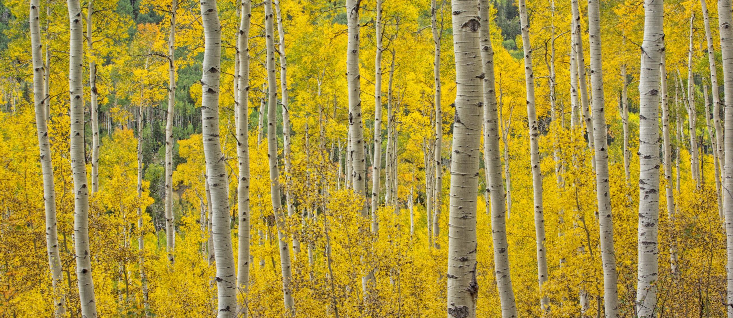 Autumn at Independence Pass